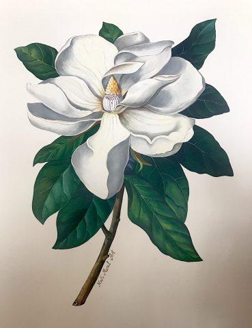 Magnolia - Lady Marmalade Cafe - Kat's Mural Art